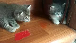 котята в добрые руки даром