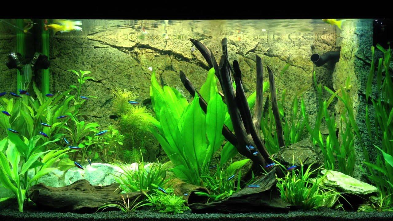 aquarium juwel rio 125 f tterungszeit youtube. Black Bedroom Furniture Sets. Home Design Ideas