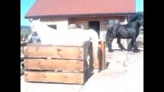 KOPULACJA KONI/COPULATION HORSES/KOPULATION PFERDE