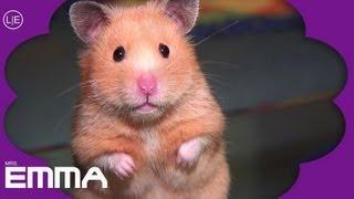 HAMSTER Emma soooo cute! - Mrs. Emma the Hamster HD