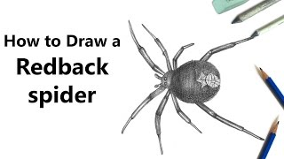 How to Draw a Redback spider with Pencils [Time Lapse]