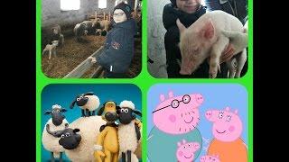 "НА ФЕРМЕ : свинки ""ПЕППА"" , баранчики ""ШОН"" ,лошади, овцы.ON the FARM : pig ""PEPPA"" , rams ""SEAN"""