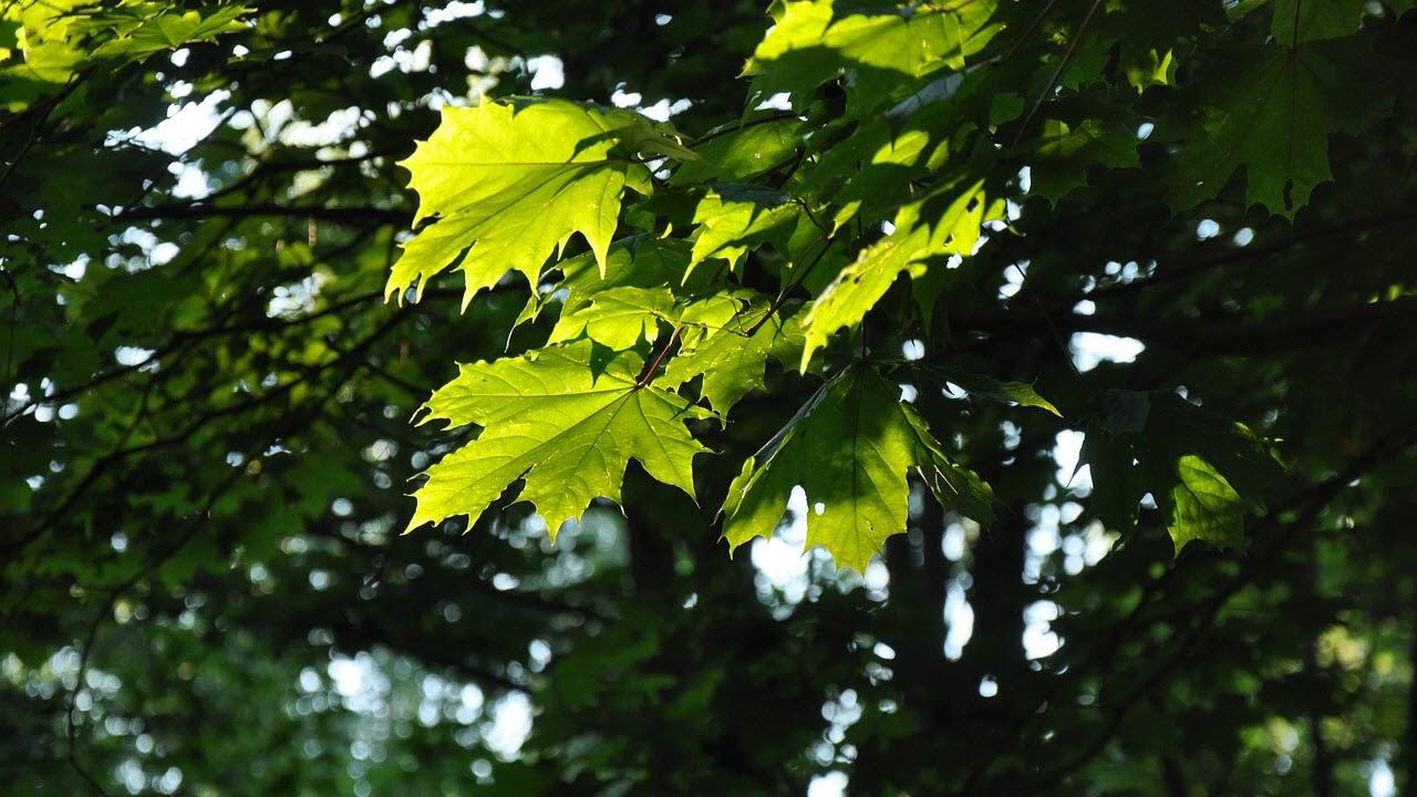 это глупым картинка фото дерева и листьев можно