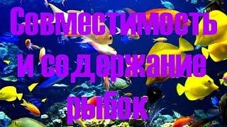 Совместимость и содержание аквариумных рыбок! Как подобрать рыбок(Совместимость и содержание аквариумных рыбок - это очень важный фактор при содержании аквариумных..., 2015-01-01T11:17:37.000Z)