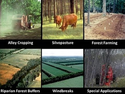 Introduction to Agroforestry Systems