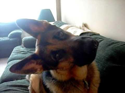 Confused Dog Head Tilt