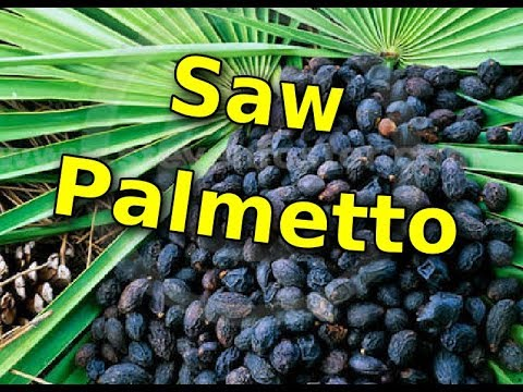 Here's Why Taking Saw Palmetto is a strong step to improve Your Prostate health