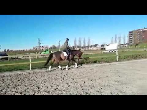 Anique - Rubels x Olivi