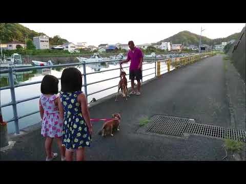 最近のHIME(サルーキー)ヒメちゃん家族訓練動画
