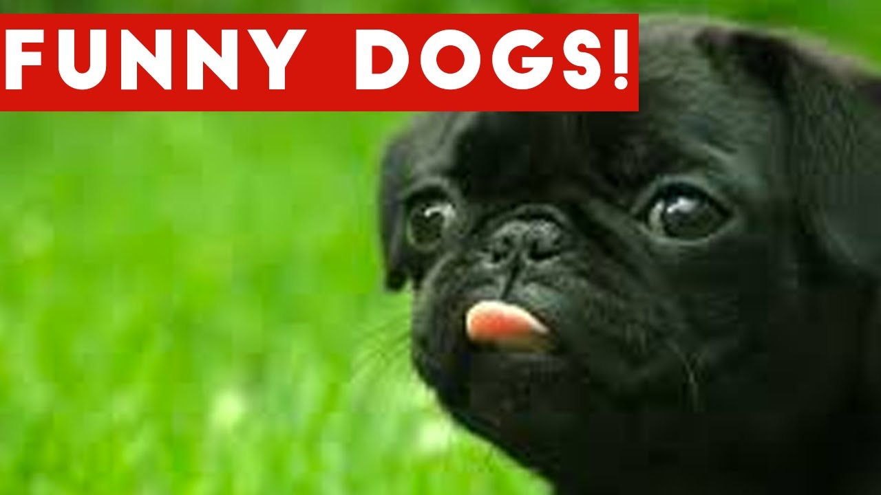 Funniest Dog and Puppy Video Compilation | Funny Pet Videos
