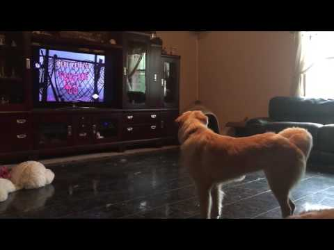 Dog is upset I muted cartoons