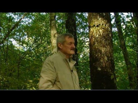 Встреча у дольменов, А.Саврасов, 9 серия, 2013 год