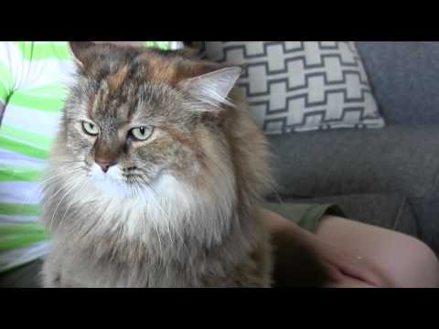 ♥ Cat Loves Being Petted (Head Scratching Goodness)!