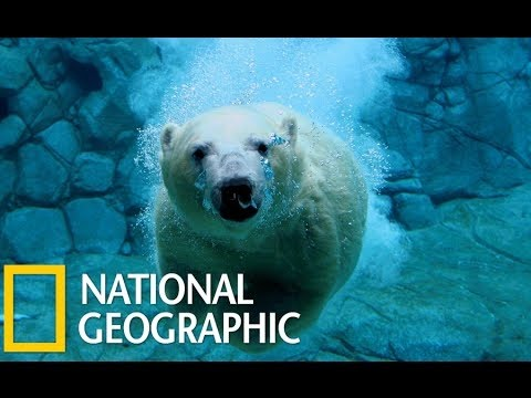 Wild Russia - Siberia (National Geographic) Animal Planet ...
