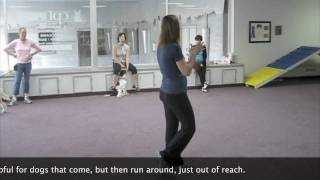 Dog Training: Intermediate Obedience Class At Cpt Training