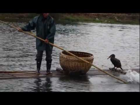 Cormorant Fishing On Li River In Yangshuo
