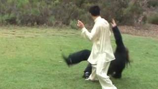 Tai Chi Application in Traditional Yang Long Form 1