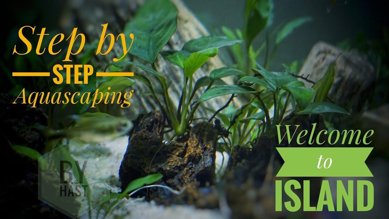 Cara menanam tanaman Anubias dalam Aquascape - YouTube