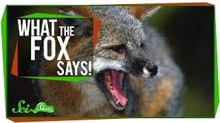 Repeat youtube video What the Fox Says