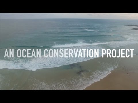 What would life without cars be like? (An Ocean Conservation Project)