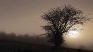 Foggy Dew (Wicklow)