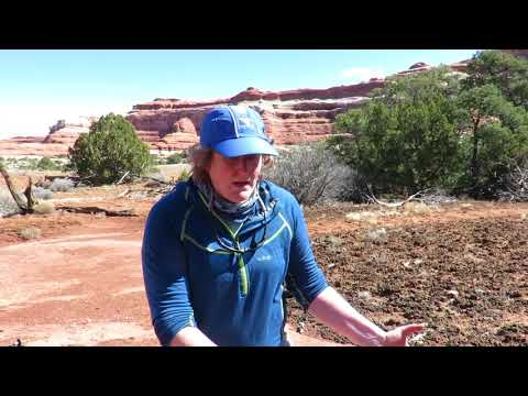 Cryptobiotic soil in Canyonlands National Park