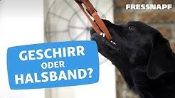 Geschirr oder Halsband für den Hund?