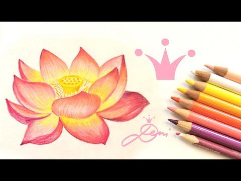 Lotosblume zeichnen lernen