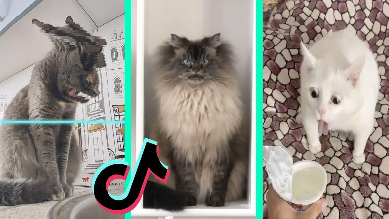 BEST DANK CAT MEMES COMPILATION OF NOVEMBER 2020 #3   Funny Cat Compilation