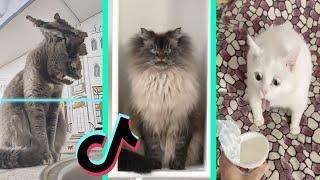 BEST DANK CAT MEMES COMPILATION OF NOVEMBER 2020 #3 | Funny Cat Compilation