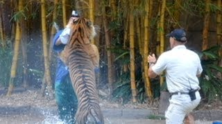 Veteran Animal Trainer Fights for His Life After Tiger Attack - Caught on Tape