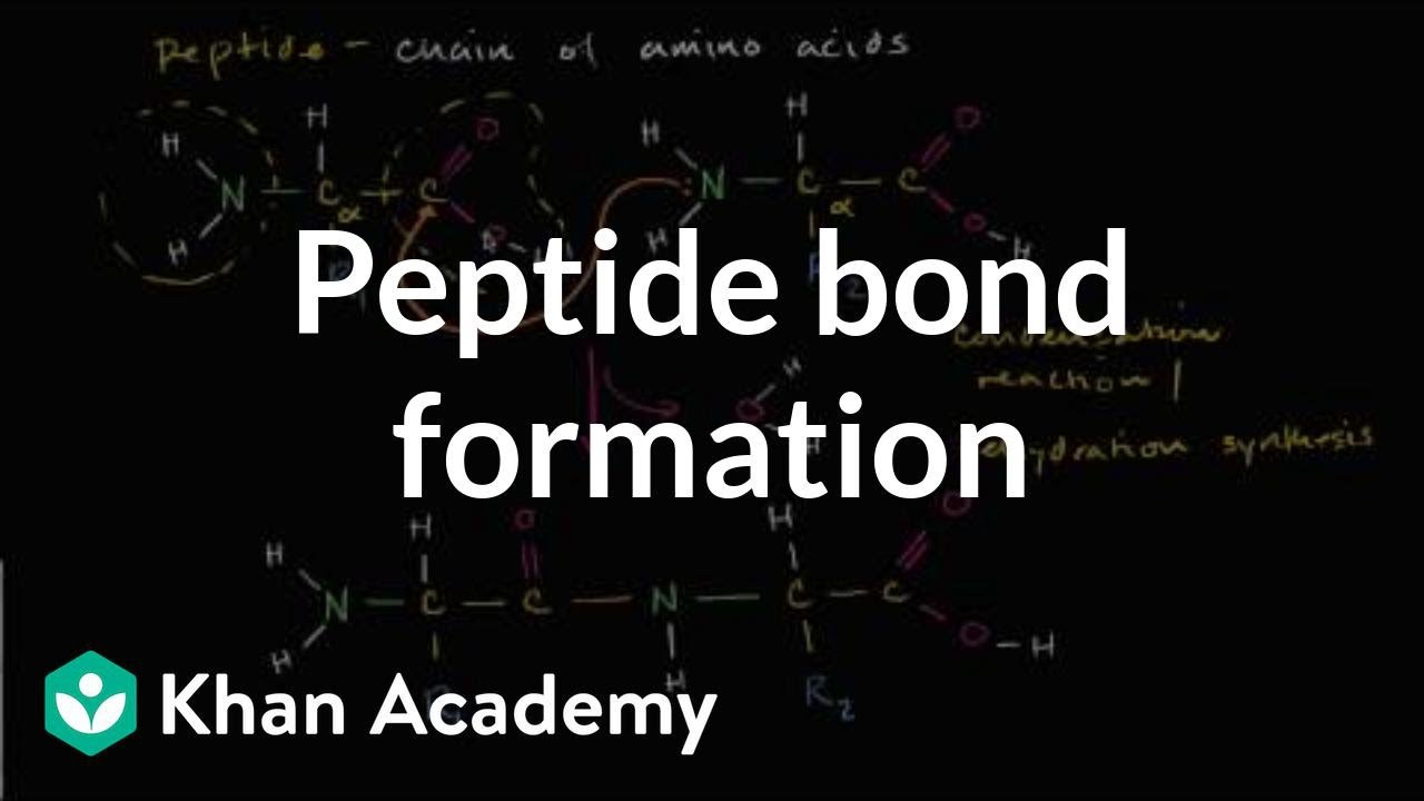 Peptide bond formation (video) | Proteins | Khan Academy