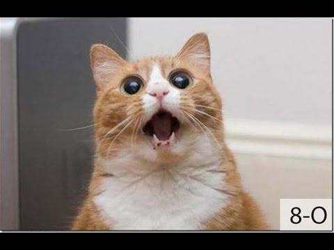 Самые лучшие смешные демотиваторы и видео про котэ, котов