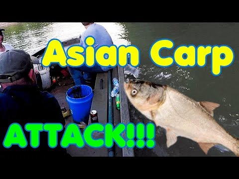 How to deal with Asian Carp - Trotliners