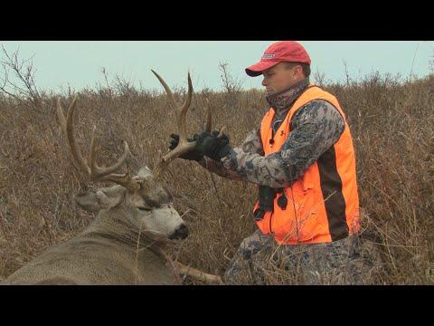 Mule Deer Hunting In Saskatchewan
