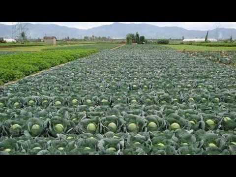 Top 10  Vegetable Farming In India