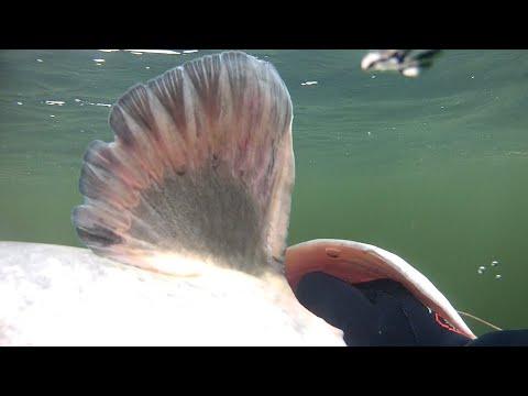 СОМ НА 8 МАРТА.Подводная охота на трофейного сома на реке Днепр.underwater hunting