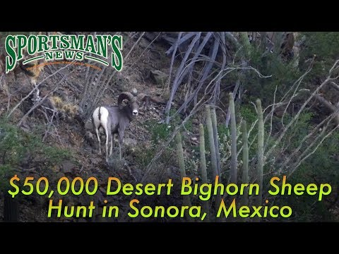 Desert Bighorn Sheep Hunt | Sonora, Mexico