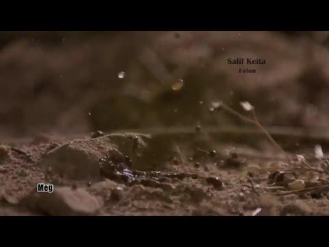 Salif Keita - Folon (lyrics)