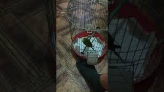 Секс собака и попугай