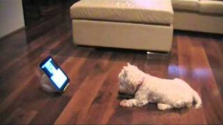 Westie Dog With Ipad 2