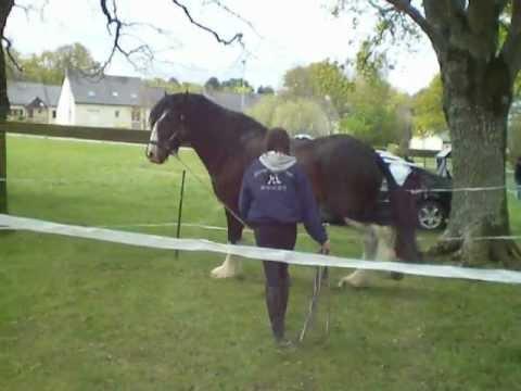 manifestation chateaubriant 44 concernant le cheval le plus grand du monde le shire. Black Bedroom Furniture Sets. Home Design Ideas