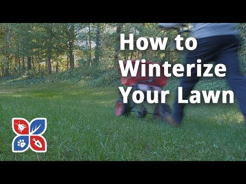 Do My Own Lawn Care – How to Winterize Your Yard – Ep36