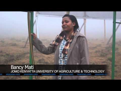 Fog Collector Transforming Maasai Water Harvesting in Kenya