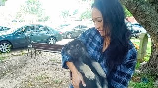 Choosing a German Shepherd Puppy for my Sister!