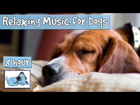 OVER 8 HOURS of Sleep Music for Dogs! Help Your Dog Calm Dow
