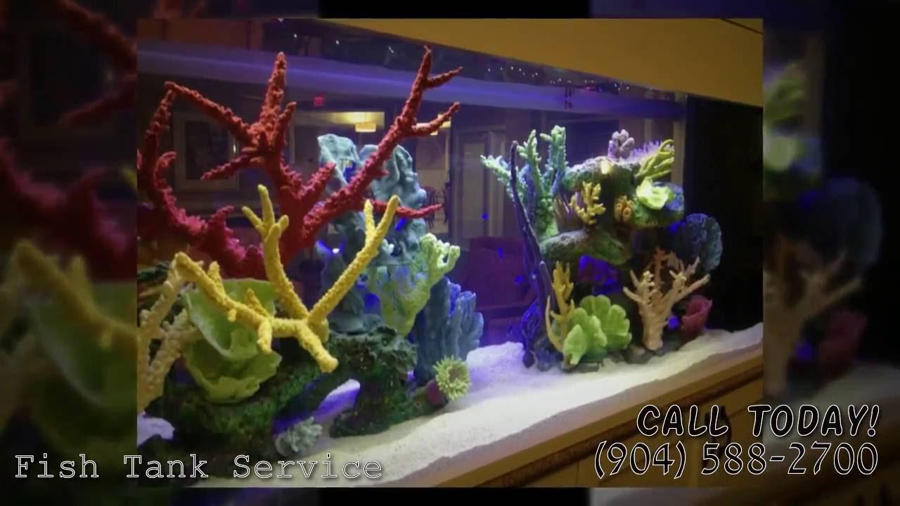 Freshwater aquarium fish jacksonville fl - Custom Made Fish Tanks 904 588 2700 Jacksonville Florida