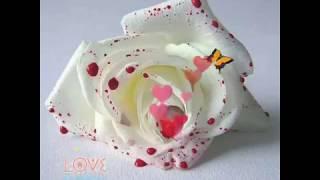 Bulbula re bulbula uploaded by krish rana