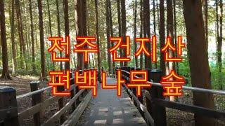 전주 건지산 편백나무 숲. 치유의 숲. 건지산의 가을.…