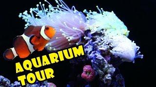 fish tank coral reef aquarium tour setup   saltwater stock list